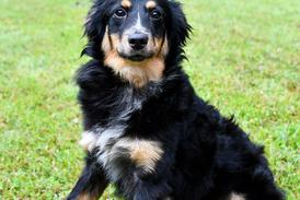 Featured Dog:Pepper